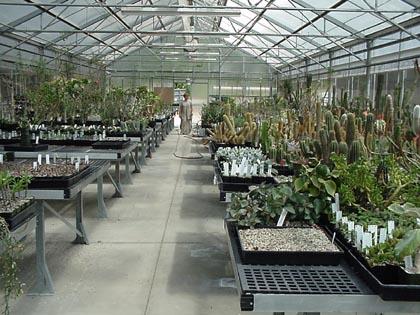 Terrific Dry Desert Greenhouse Home Interior And Landscaping Oversignezvosmurscom